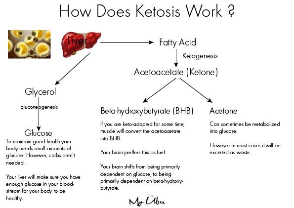How Does Ketosis Work-01 - My Über Diet